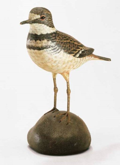 A RARE KILLDEER