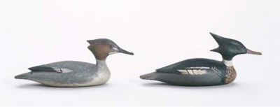 A RED BREASTED MERGANSER HEN A