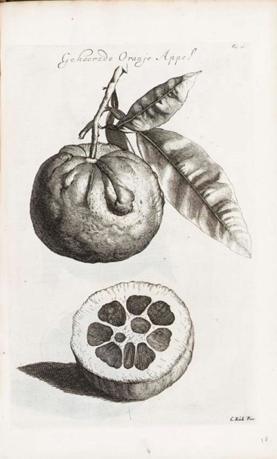 CAUSE, Hendrik (1648-1699). De