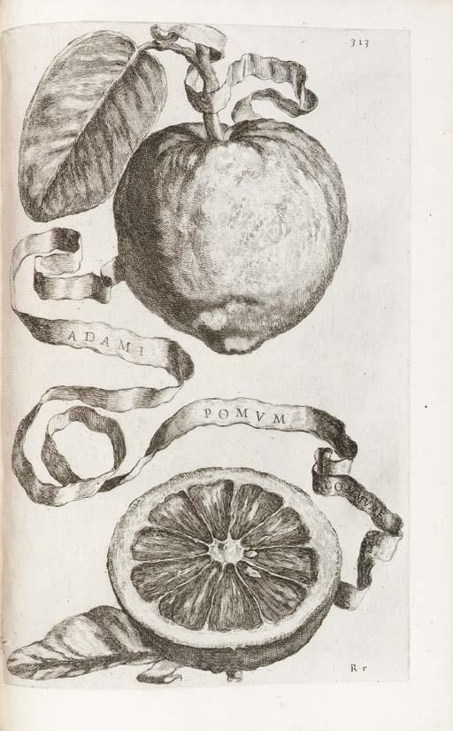 FERRARI, Giovanni Battista. He