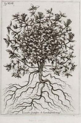 ZANONI, Giacomo (1615-1682). I