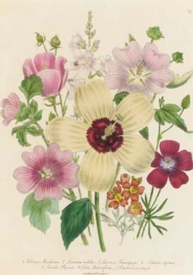 JANE WELLS LOUDON (1807-1858)