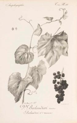 VIALA, Pierre (1859-1936) & Vi