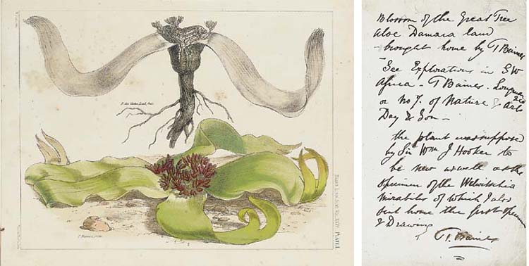 BAINES, Thomas (1822-1875). Ex