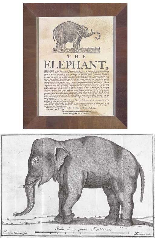 ELEPHANTS -- BOTTIFANGO, Giuli
