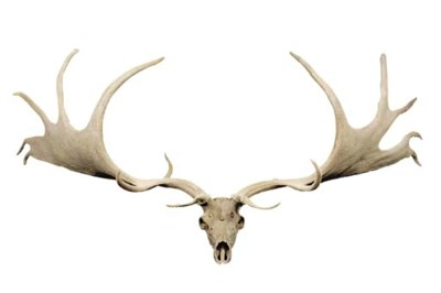 A PAIR OF GIANT DEER OR 'IRISH