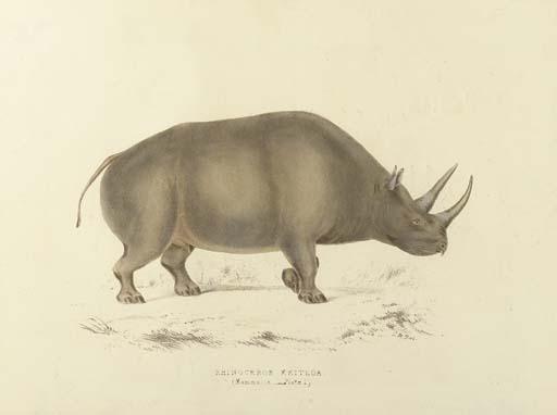 ANDREW SMITH (1797-1872)