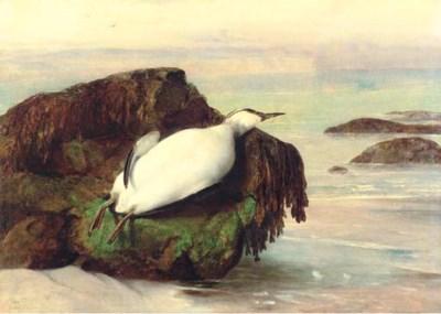 John George Naish (1824-1905)