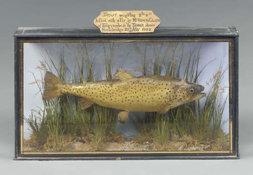 A CASED STUFFED TROUT