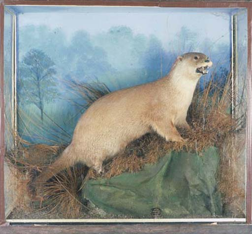 A STUFFED AND CASED OTTER