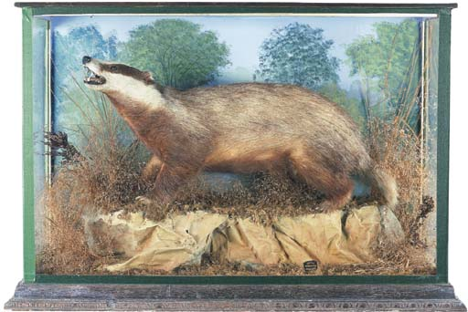 A STUFFED AND CASED BADGER