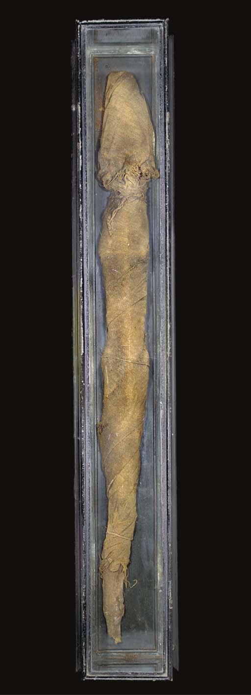 AN EGYPTIAN MUMMIFIED YOUNG ADULT NILE CROCODILE
