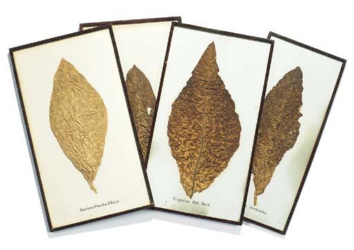 Four specimen tobacco leaves