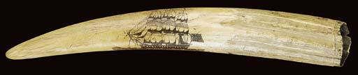 A SCRIMSHAW-DECORATED WALRUS T