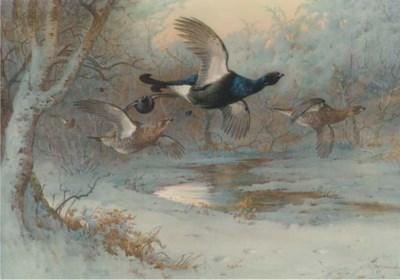 Archibold Thorburn (1860-1935)