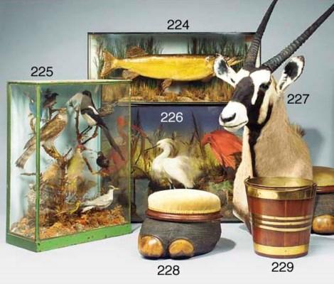 A glazed case of twelve stuffe