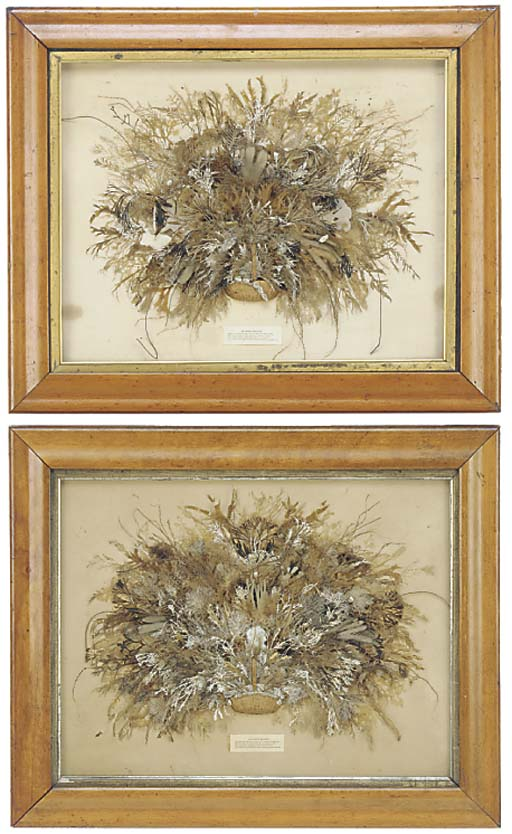 A pair of Victorian seaweed co