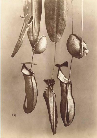 ALPHONSE BERNOUD (1820-1875)