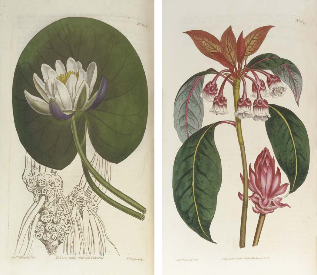 CURTIS, William.  The Botanical Magazine; or, Flower-Garden Displayed, London: various imprints, 1787-1979. 164 volumes in 140 (including a duplicate of volume 71 but lacking volumes 156, 157 & 159) and volumes 164 (fascicule IV) to 182 in 55 fascicules (lacking parts 1, 3 & 4 in volume 173, part 3 in volume 175, all of volume 176, parts 1 & 2 of volume 177 and all of volumes 179 & 180), index to volumes 1-20 (1805), index to volumes 1-107 (1883) and index to volumes 1-164 (and a duplicate, 1956), 8° (232 x 135mm. and larger). 2 engraved portraits and circa 10,000 plates including hand-coloured engravings, hand-coloured lithographs, chromolithographs and coloured plates. (Occasional spotting and offsetting.) Volumes 1-70 contemporary half calf (41-70 not uniform), volumes 71-164 original cloth, the remainder in wrappers (some early volumes rubbed). Provenance: Kathleen Alice Cuthbert (later Lady Rayleigh, bookplate).  Curtis's Botanical Magazine is the 'old