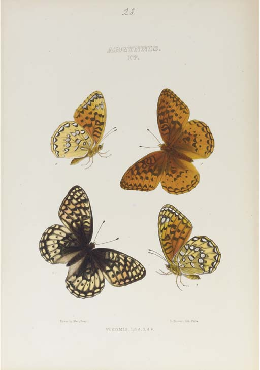 EDWARDS, William Henry (1822-1909).  The Butterflies of North America, New York, Cambridge and Boston: 1874-1884-1897. 3 volumes, 4° (288 x 228mm). 152 hand-coloured lithographic plates by and after Mary Peart, Edward A. Ketterer and others, many coloured by Lydia and Leslie Bowen, printed by Bowen & Co., T. Sinclair and others. (Vol. III with occasional light spotting, some light browning or marginal dampstaining, Debis Portlandia plate detached, vol. II with front free endpapers detached.) Volumes I and II uniformly bound in contemporary half black morocco gilt by G. Schmidt & Bro.s (booklabel), g.e., vol. III in red morocco gilt.