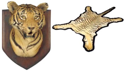 A MOUNTED TIGERS HEAD AND SKIN