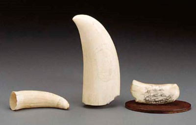 A GROUP OF THREE WHALES TEETH