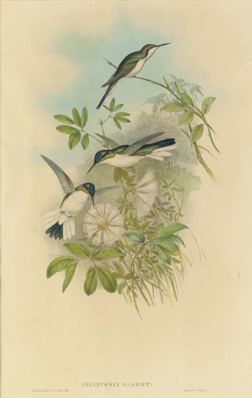 JOHN GOULD (1804-1881), H.C. R