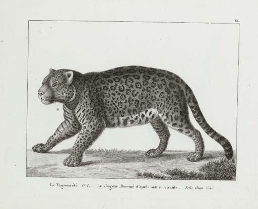 BARCIA, Andres Gonzales (1673-