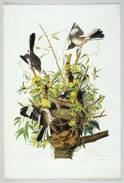 The Mocking Bird (Plate 21) No