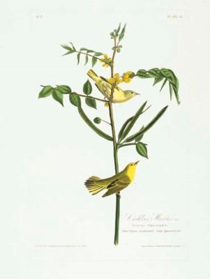 Children's Warbler (Plate 35)