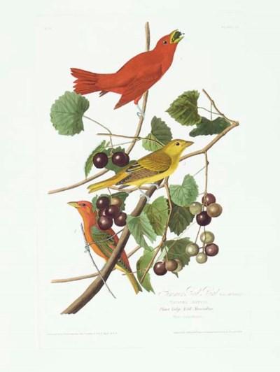 Summer Red Bird (Plate 44) Sum
