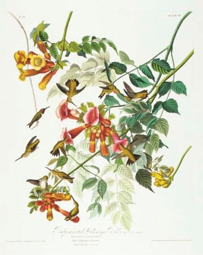 Ruby-throated Humming Bird (Pl