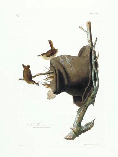 House Wren (Plate 83) Troglody