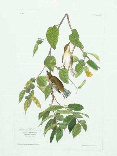 Autumnal Warbler (Plate 88) Ba