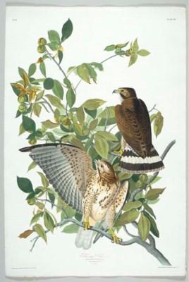 Broad-winged Hawk (Plate 91) B