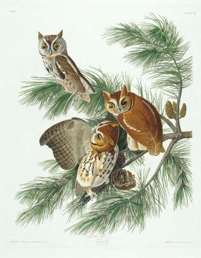 Mottled Owl (Plate 97) Eastern