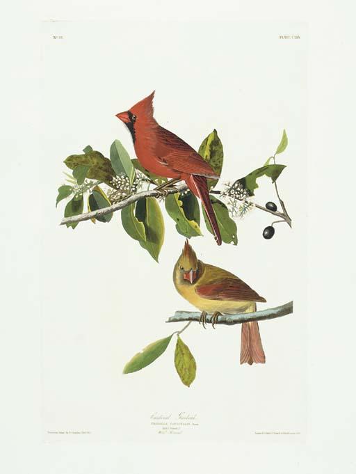 Cardinal Grosbeak (Plate CLIX)