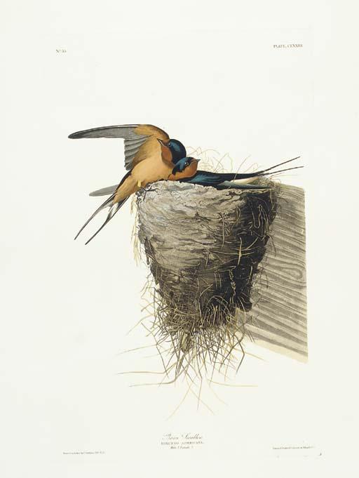 Barn Swallow (Plate CLXXIII) H