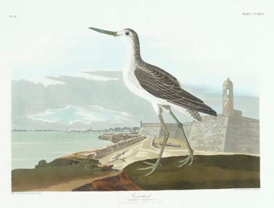 Greenshank... View of St. Augu