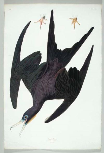 Frigate Pelican (Plate CCLXXI)
