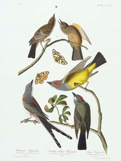 Arkansaw Flycatcher. Swallow__