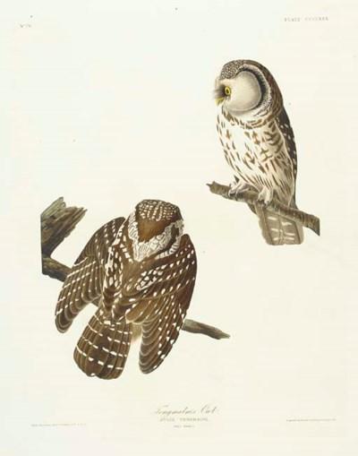Tengmalm's Owl (Plate CCCLXXX)