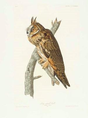 Long-eared Owl (Plate CCCLXXXI