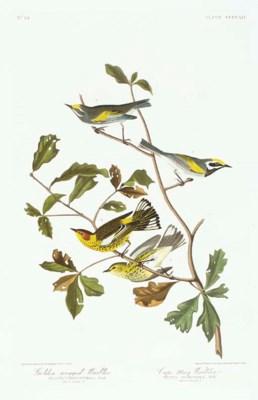 Golden-winged Warbler. Cape Ma