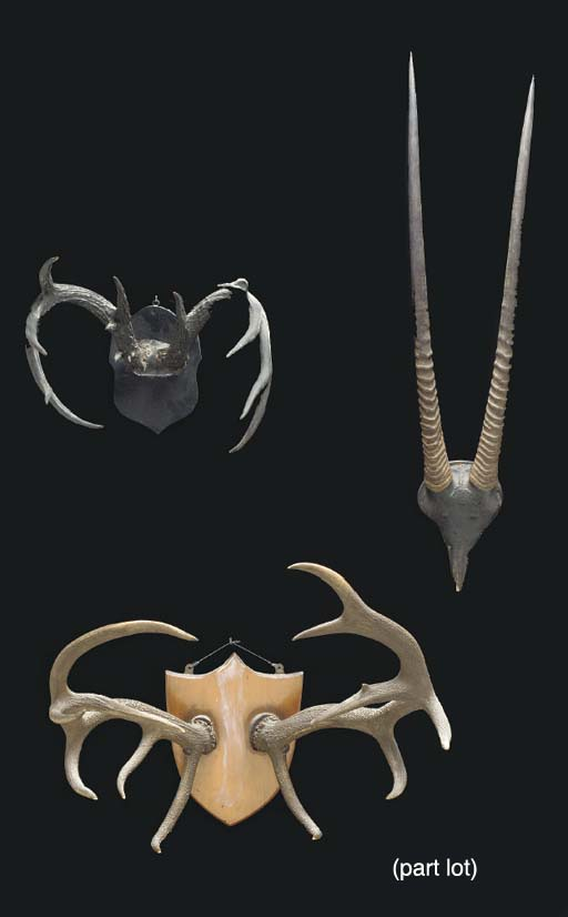 A GROUP OF SIX MOUNTED ANTLERS