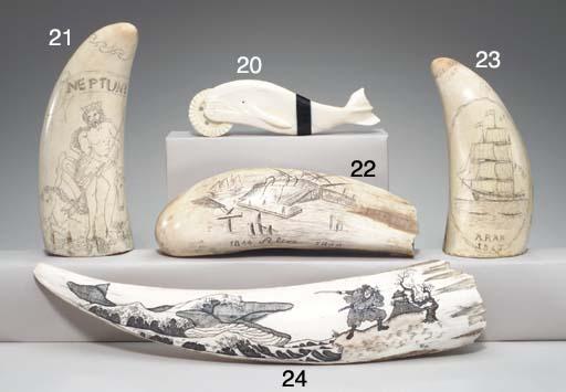 A walrus tusk with scrimshaw o