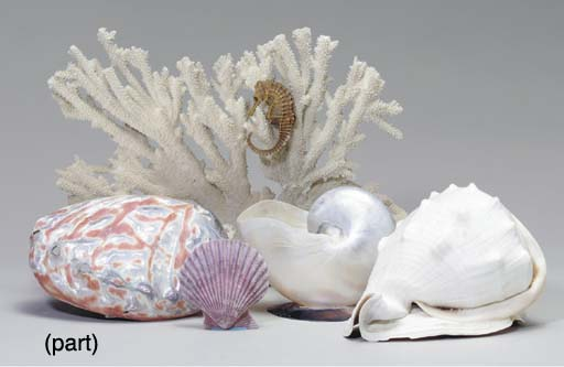 A GROUP OF SHELLS AND CORAL SP