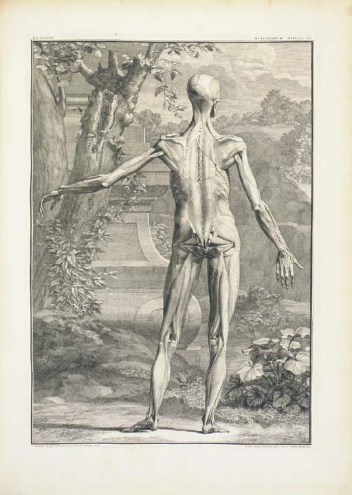 ALBINUS, Bernhard Siegfried. T