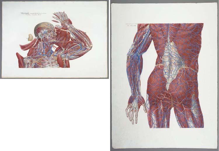 MASCAGNI, Paolo. Anatomia univ