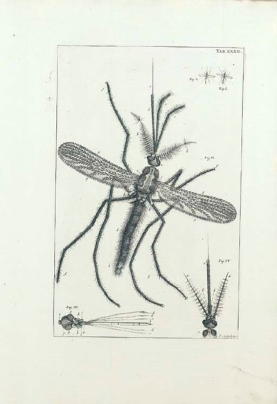 SWAMMERDAM, Jan (1637-1680). B